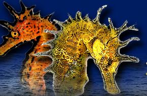 cavallucci marini megale hellas diving center marina di gioiosa ionica 1