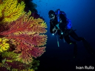 Immersioni megale hellas diving center a marina di gioiosa ionica